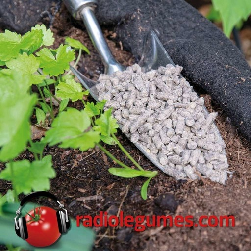 Fertilisation.mp3