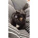 Chat aux yeux hypnotiques