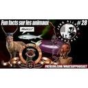 Jerr Allain Podcast 28 Fun Fact Animaux