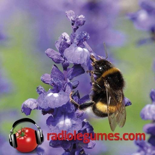 Pollinisation_Radio_legumes_mixage_final.mp3