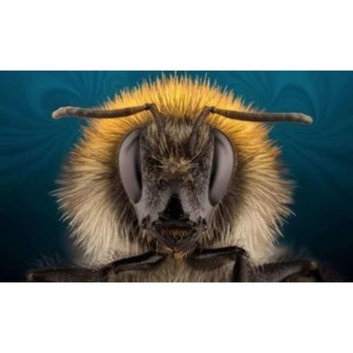 Hey Bumblebee