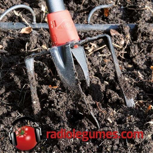 Plantation_legume_mixage_final.mp3