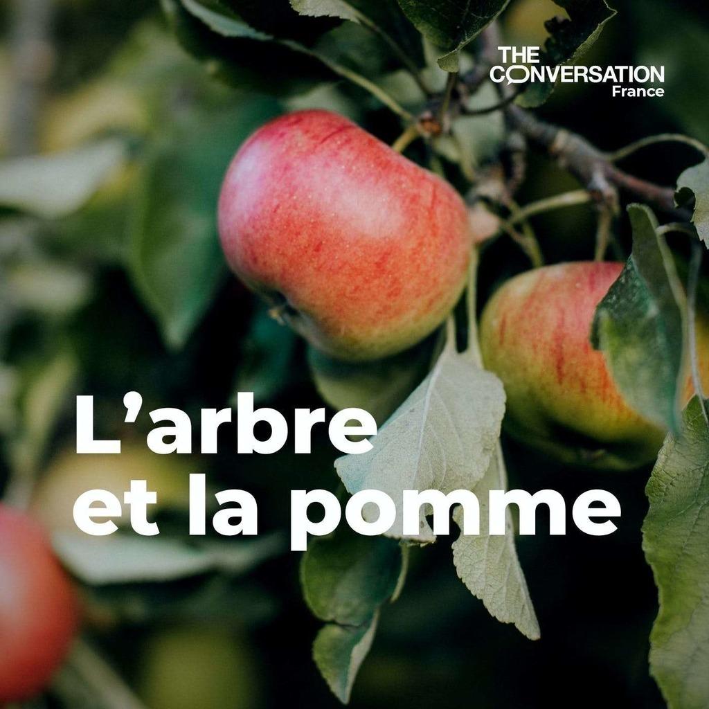 L'arbre et la pomme