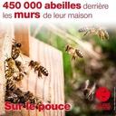 3 août 2021 - 450 000 abeilles derrière les murs de leur maison - Sur le pouce