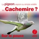 28 mai 2020 - Le pigeon, espion ou simple volatile au Cachemire ? - Sur le pouce
