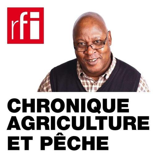 Chronique agriculture et pêche - Mali: le séchage de mangues à Sikasso