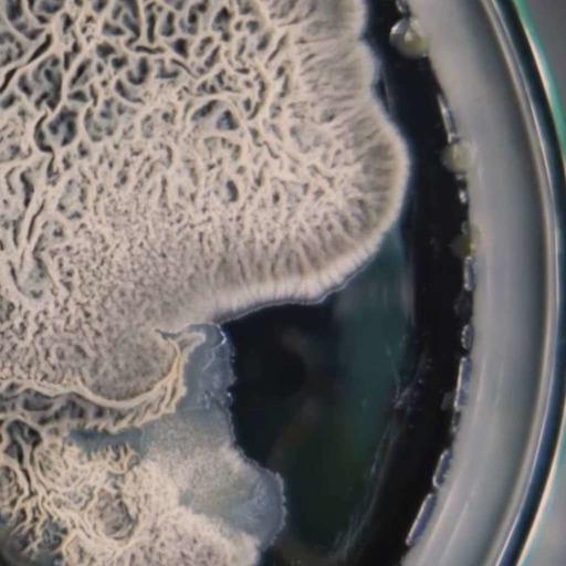"""Antibiotique, """"la fin d'un miracle"""" ? Entretien avec Philippe Glaser"""