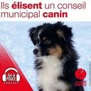 27 novembre 2021 - Ils élisent un conseil municipal canin - Sur le pouce