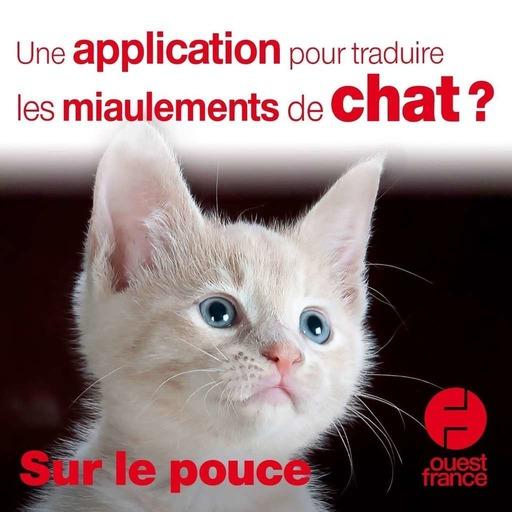 13 novembre 2020 - Une application pour traduire les miaulements de chat ? - Sur le pouce
