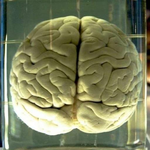 C'est quoi le cerveau ?