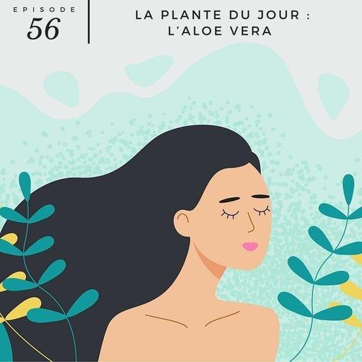 #56 - La plante du jour :  l'aloe vera