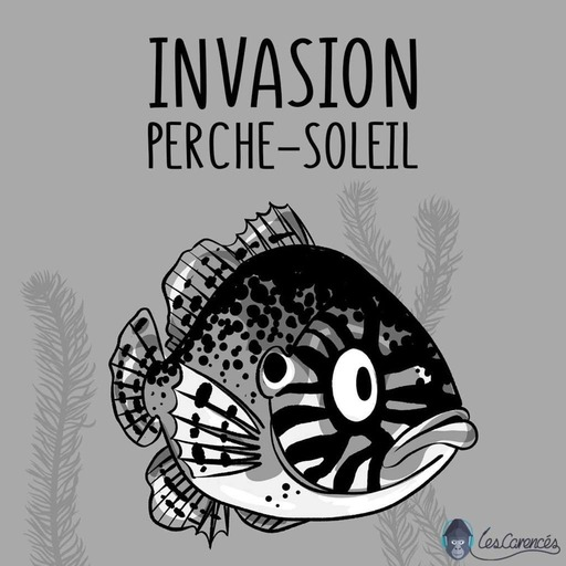 Les Carencés – Invasion perche-soleil